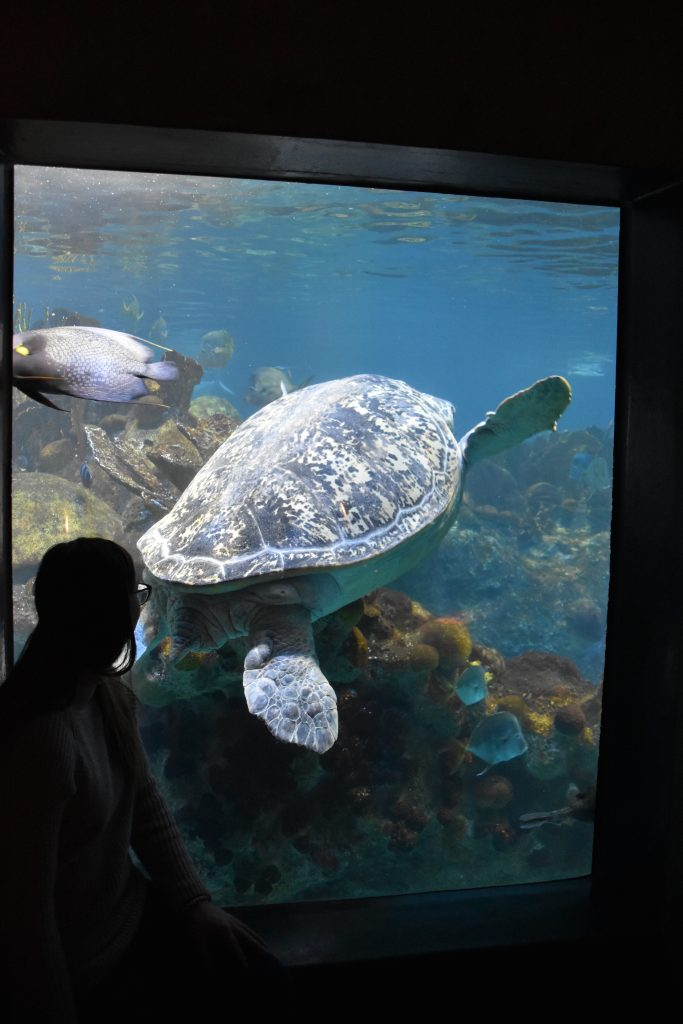 What To Do in Boston New England Aquarium