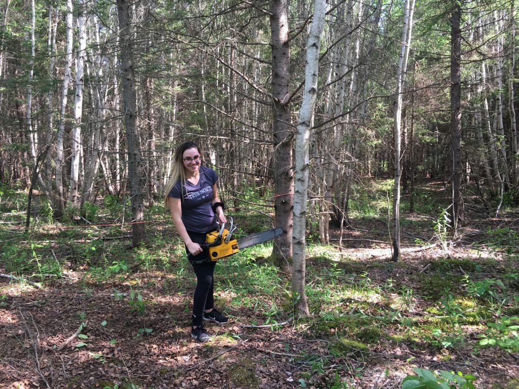 Cutting Tree Driveway